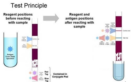 How a Lateral Flow Rapid Antigen Test for Group A Strep Works